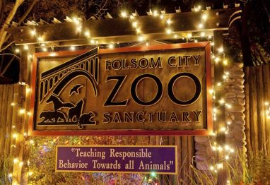 folsom-zoo-382x262.jpg